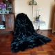 Fur Carpet Fur Coverlet Blanket of Black Fox Fur